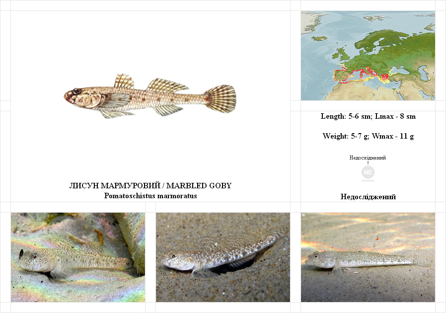 marbled-goby