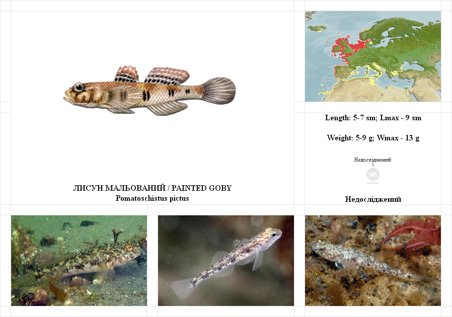 painted-goby