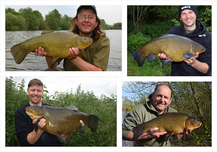 tench4