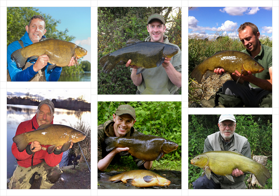tench6