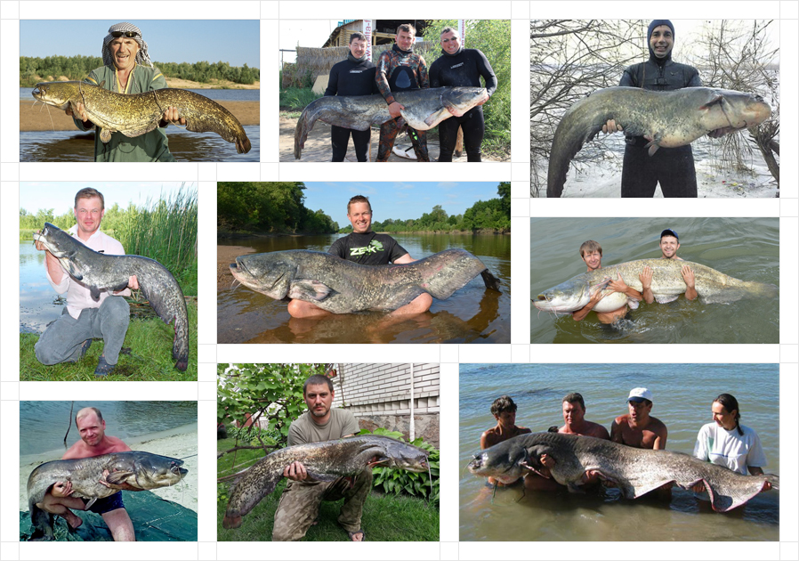 wels-catfish-fb