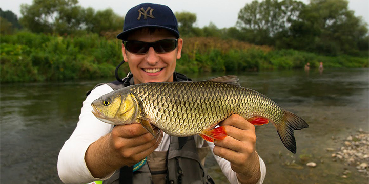 Portrait. European Chub