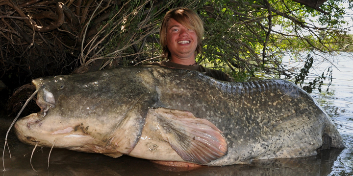 wels-catfish