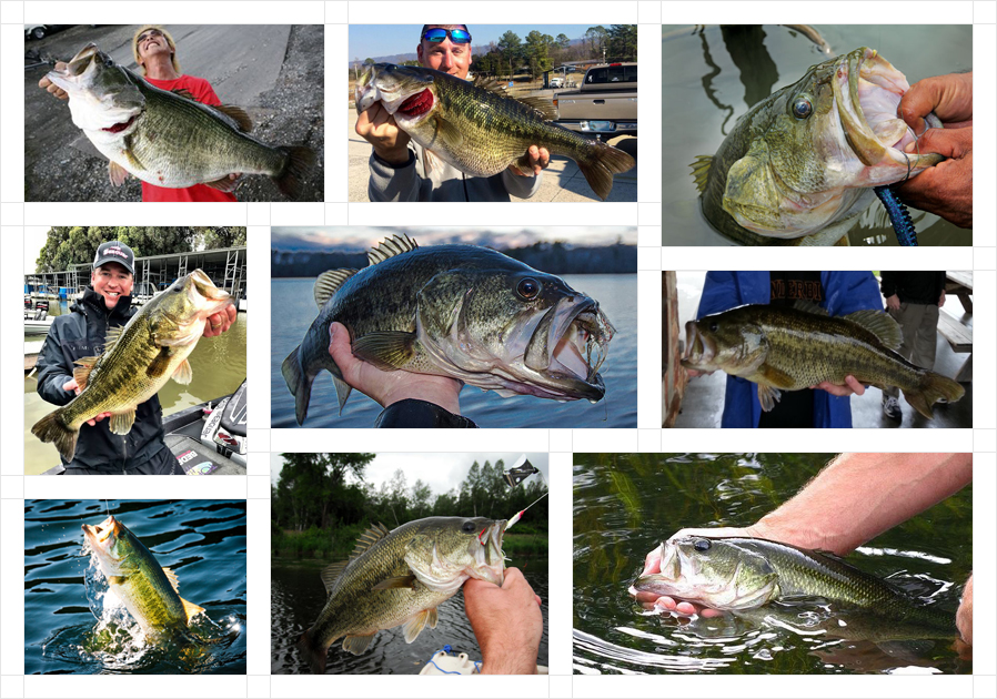 largemouth-bass-fb